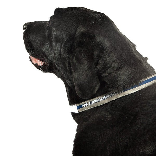 Magnetic Pet Collar Full Size Image #2