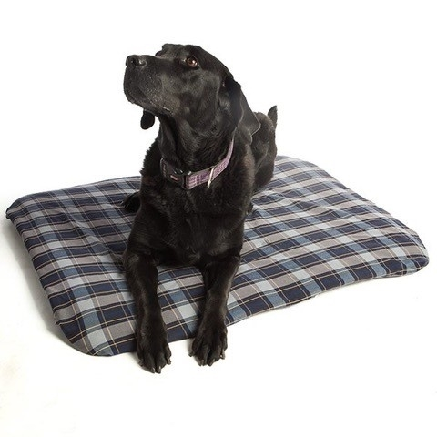 Magnetic Pet Bed Large Full Size Image #1